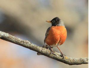 Bird Hike at Carpenter Nature Center - Minnesota Campus