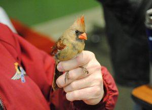 Bird Banding at Carpenter Nature Center