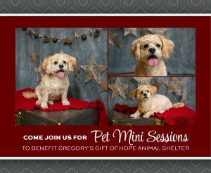 PET MINI SESSIONS at Kristina Lynn Photography & Design
