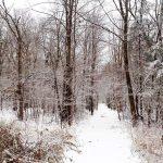 SCRA Winter Trails Day
