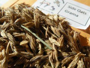 Start Native Prairie Seeds