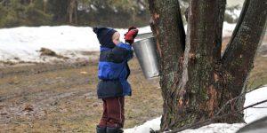 Preschool Story Time: Syrup Season