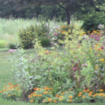 An Invitation to Landscape With Native Plants: Getting Started