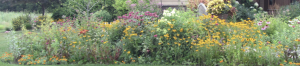 An Invitation to Landscape With Native Plants: Get...