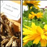 Start Native Prairie Plant Seeds