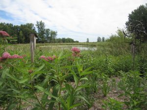 Lake Elmo: Planting for Clean Water - Wonderful We...
