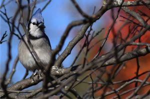 MN Bird Hike