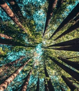 Forest Bathing Class