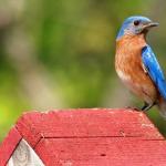 Bluebird Conservation Workshop