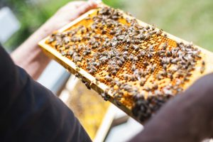Adult Education at Franconia: Beekeeping 101