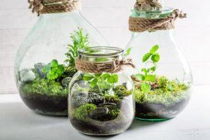 CANCELED - Planting Mini Terrariums