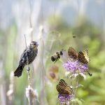 Invite Them In: Backyard Landscape for Pollinators (Virtual)