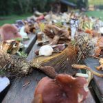 Getting to Know Minnesota Mushrooms