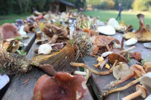 Getting to Know Minnesota Mushrooms