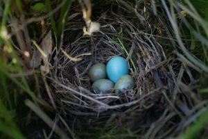 Nature Egg Hunt