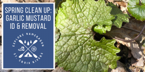 Spring Clean Up: Garlic Mustard ID & Removal