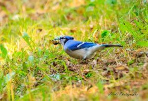 Bird Hike at Lake Elmo Park Reserve