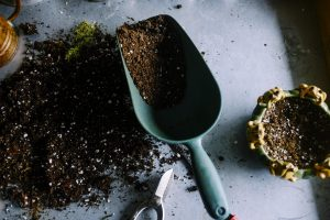 Better Vegetables Through Better Soils