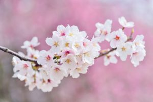 Spring into Summer
