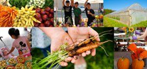 Hmong American Farmers Association
