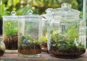 Create a Terrarium